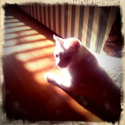 Morning Sun Worship