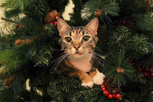 keep your tree safe for kitty things to watch no more texas governors for president. Black Bedroom Furniture Sets. Home Design Ideas