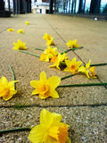 narcissus advances, spurned: