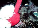 Toki battles the pink mouse: