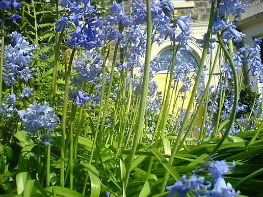 And then there were only bluebells