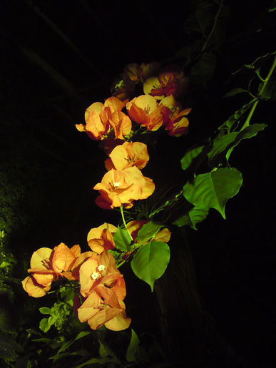 Floral manoeuvres in the dark