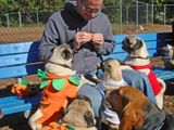 At the Pug-O-Ween meetup 3