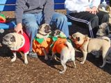 At the Pug-O-Ween meetup 4
