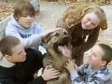 SAVE CONGO THE GERMAN SHEPHERD!