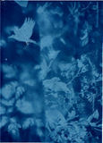 playing with Cyanotype