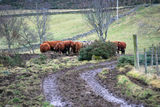 Coos!... (and rocks)