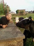 Close encounters of the cow kind