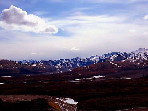 More Denali scenery