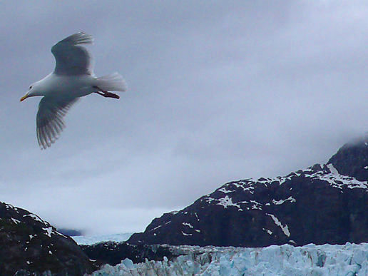 Seagulls and Glaciers