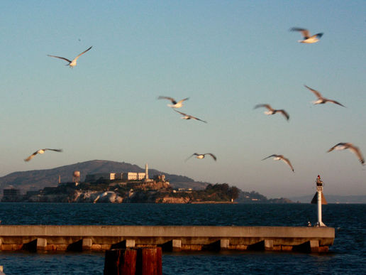The seagullman of Alcatraz?