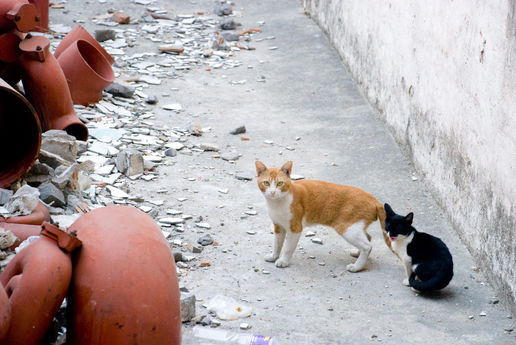 Rubbish cats