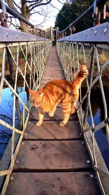 The keeper of the bridge