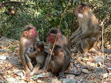 More Elephanta Monkeys