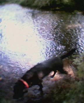 My dog coming out of river