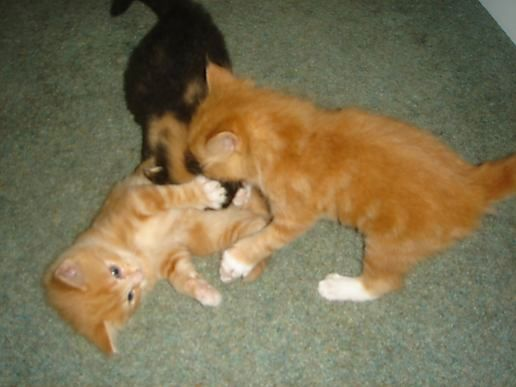 Play fight