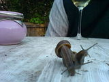 hot snail floorshow action