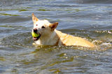 Playing Ball at Danzig Dam