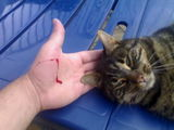 evil cat cut my hand