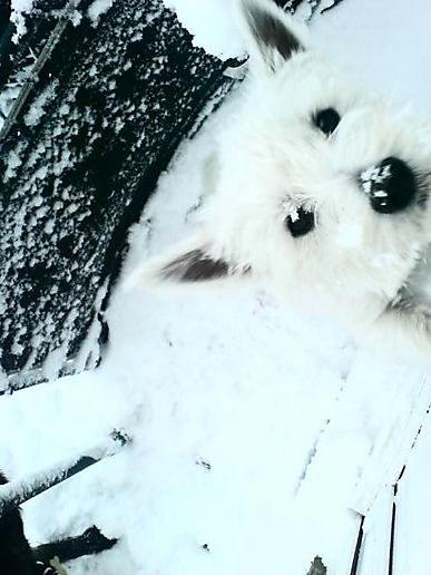 Pono in the Snow