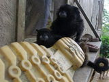 Today's monkey picture