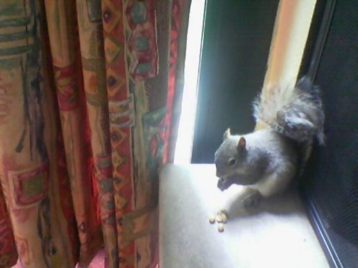 Cheeky T Squirrel