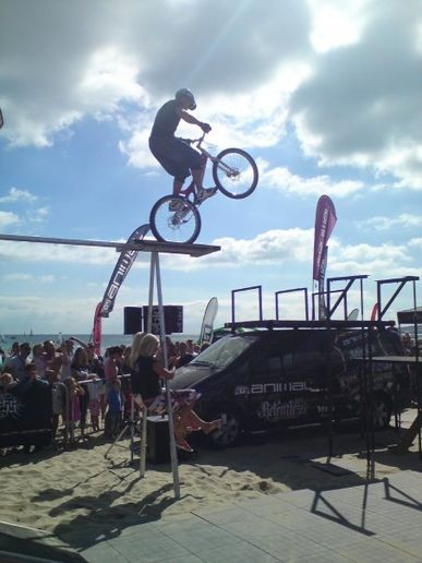 Sandbanks Animal Windfest