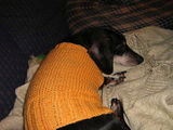 Bandit with the knit stylee :-)