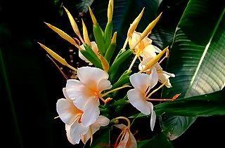 pretty plants - Pretty Plants