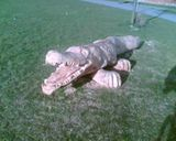 Crocodile bench