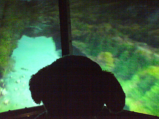 Captain Freakdog surveys from the air