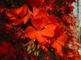 Hot house flowers - red