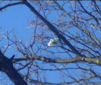 bag in tree
