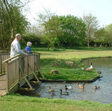 90+ and not too old to enjoy feeding the ducks, not to mention the geese and goslings!