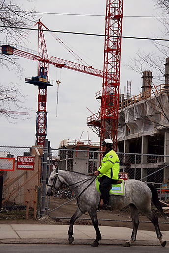 dapple grey on Queen Street
