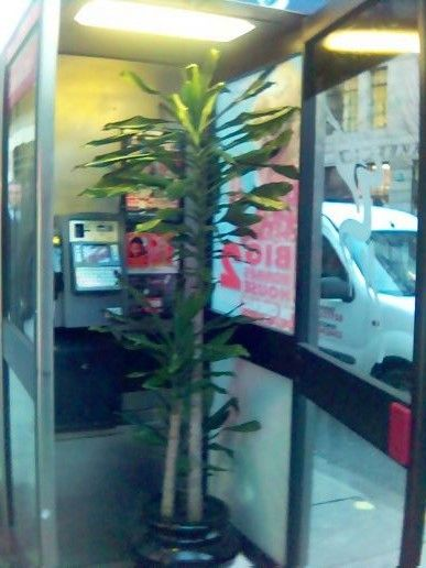More of the plant in a phone box