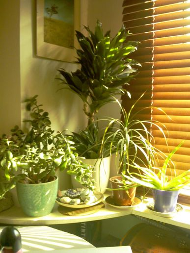 New blinds and cleaned plants