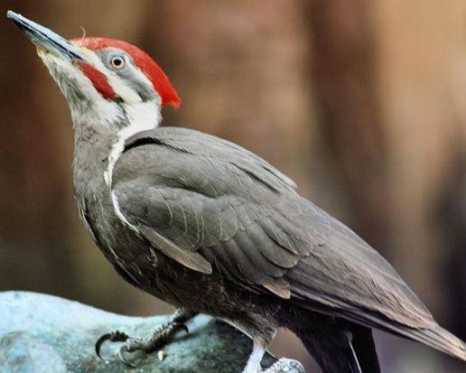 RichS Backyard Birds : More Backyard Birds, at The Birds