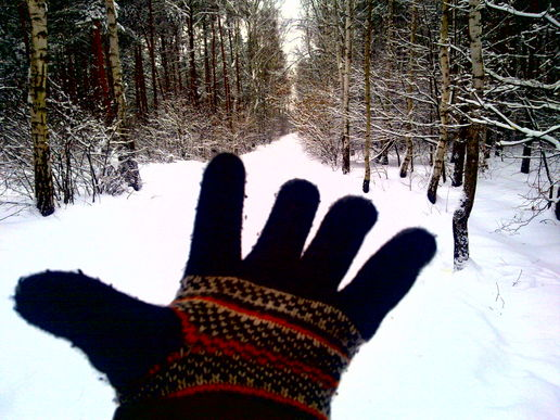 winter, snow, glove, and the dog