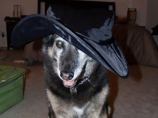 The best thing about wearing the witch hat, is sticking it on others.