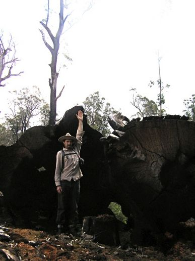 Logging East Gippsland