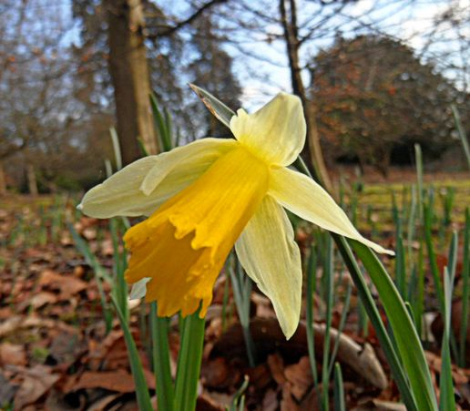 Happy St David's Day!