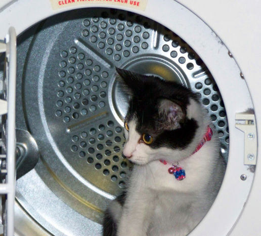 There's a cat in the tumble dryer...
