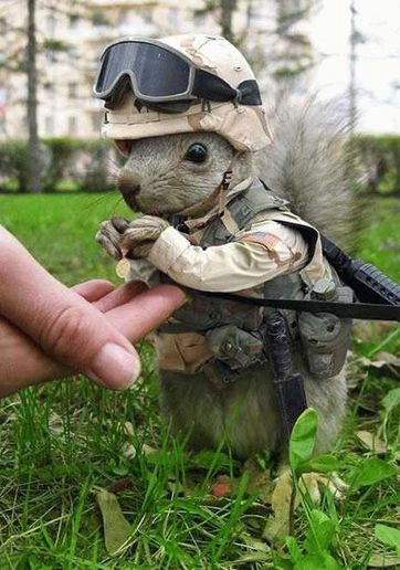 Private Nutkins