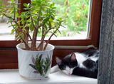 Fable and Jade Plant..