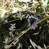 a moth/butterfly stayed still enough for me to take a couple of pictures