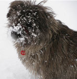 Benji and yesterday's snow ... this is fun...