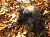 Benji loves the leaves