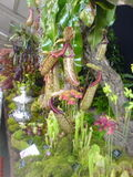 Harrogate Flower Show - The best in show!