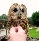 Meet the tawny owl - I'm afraid I have forgotten her name!